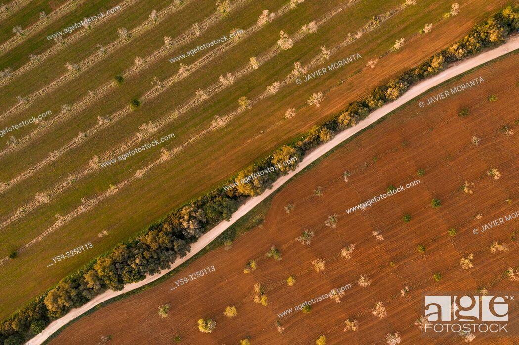 Stock Photo: Aerial photo of almond blossoms, Spain, Balearic Islands, Mallorca, Llucmajor.