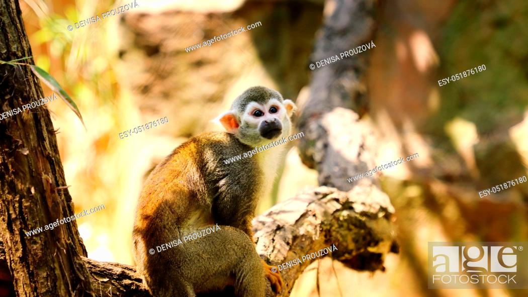Stock Photo: Common monkey on the bruch. Photo from animel live.