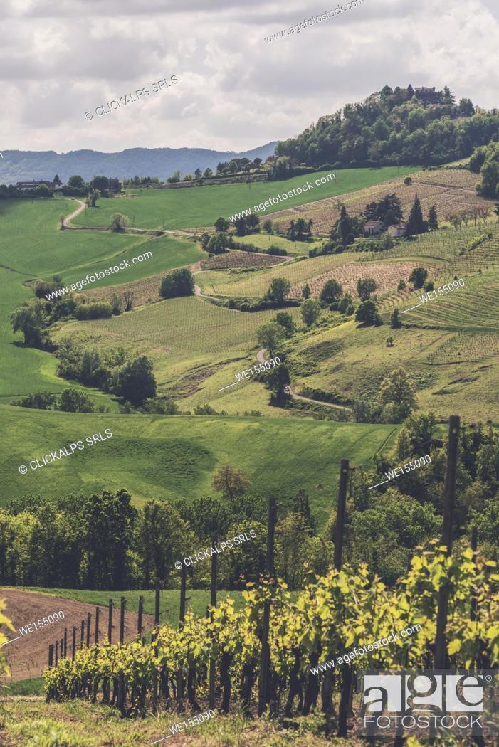 Stock Photo: Oltrepo Pavese, Province of Pavia, Lombardy, Italy.