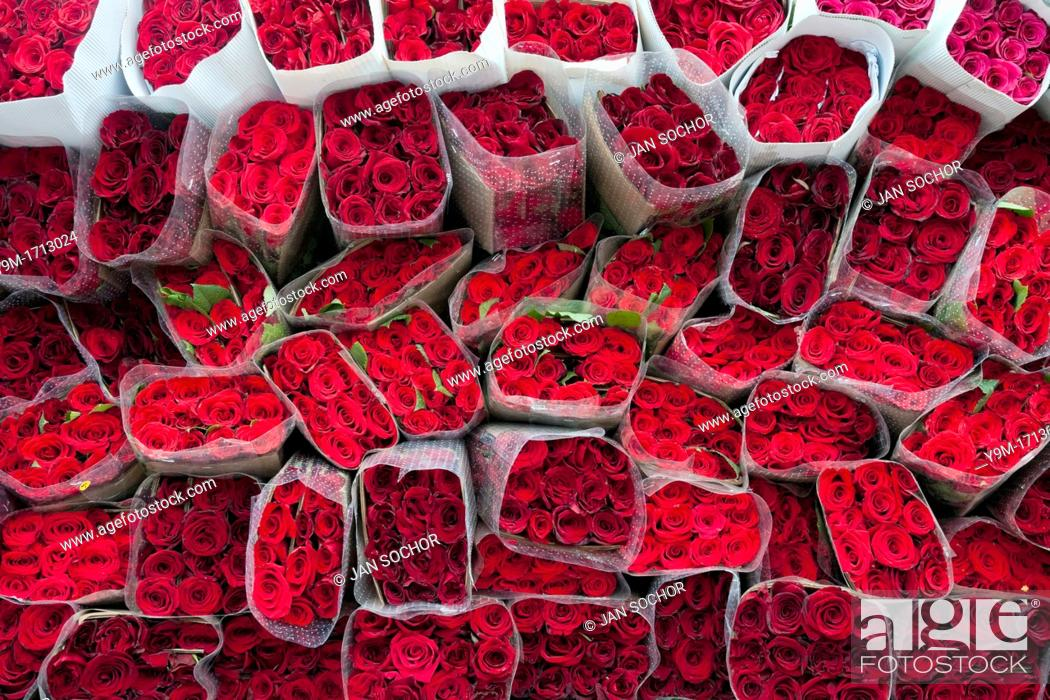 Stock Photo: Wrapped bouquets of red roses sold in the flower market of Bogota, Colombia, 10 July 2010  South American countries Colombia and Ecuador are world leaders in.