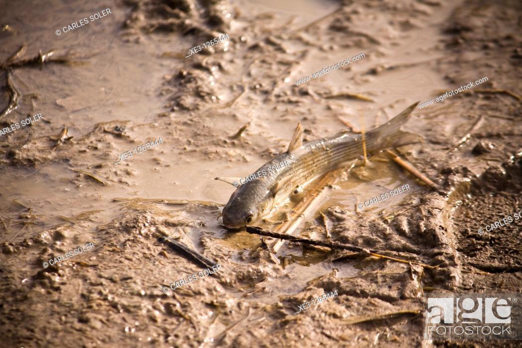 Imagen: Samarugo ahogándose.