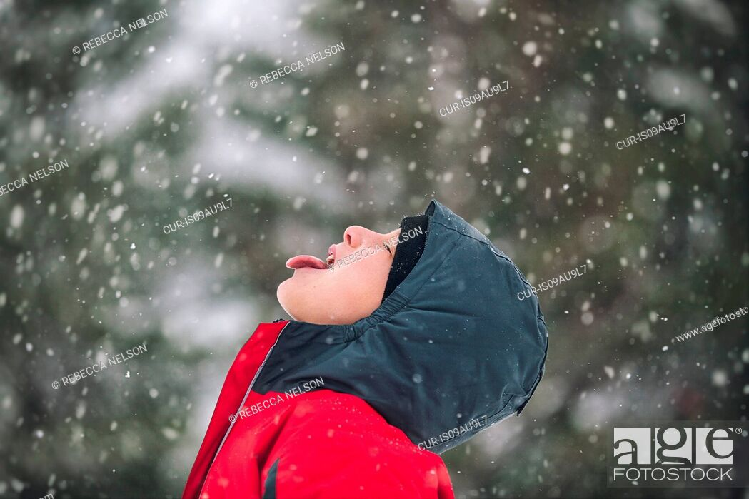 Imagen: Side view of boy sticking out tongue catching snowflakes.