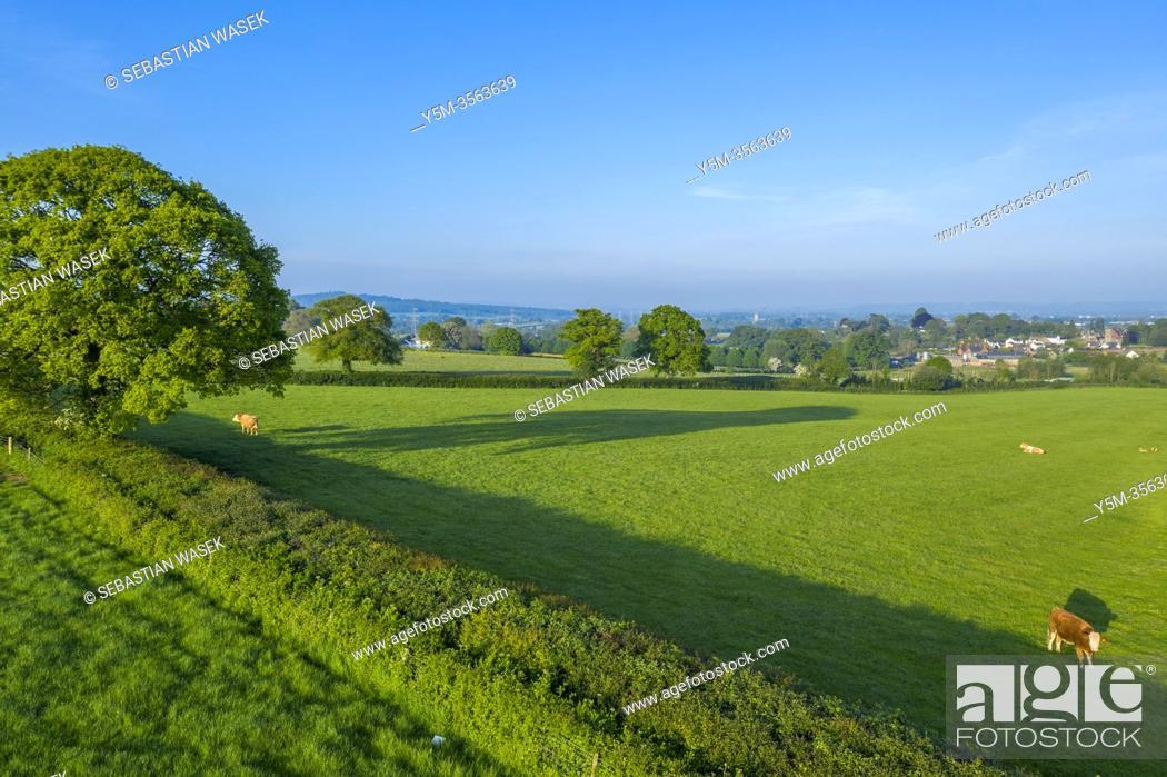 Stock Photo: Spring in Devon near Exeter, Devon, England, United Kingdom, Europe.