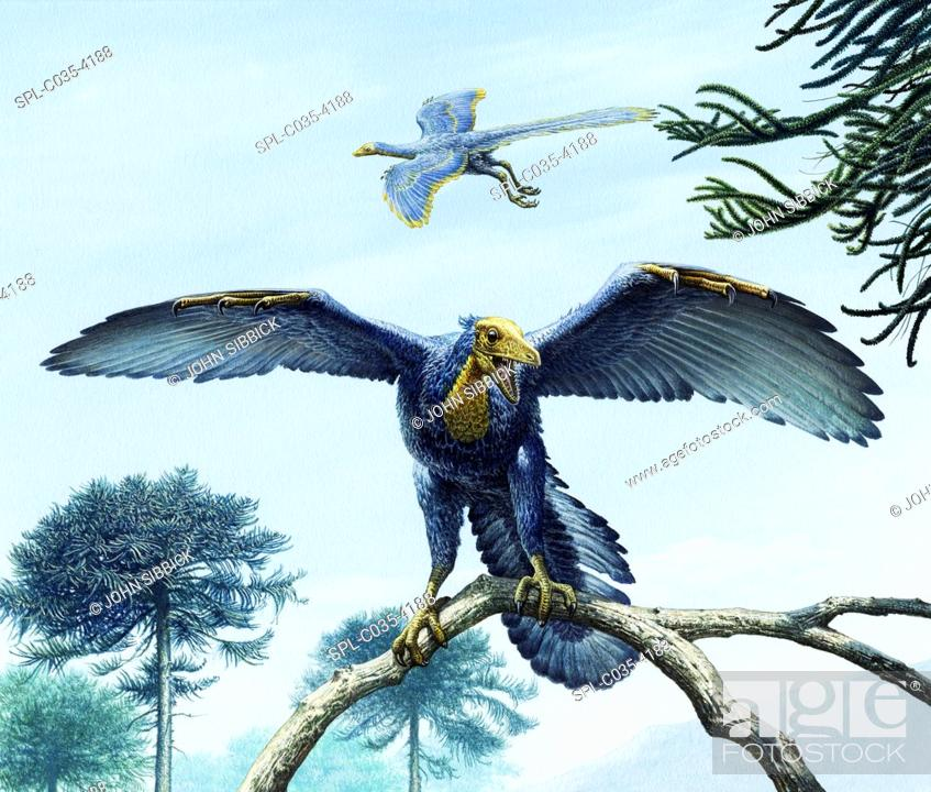 Stock Photo: Archaeopteryx bird-like dinosaurs, illustration. Eleven specimens of Archaeopteryx have been found, all from the Solenhofen limestones of the Late Jurassic.