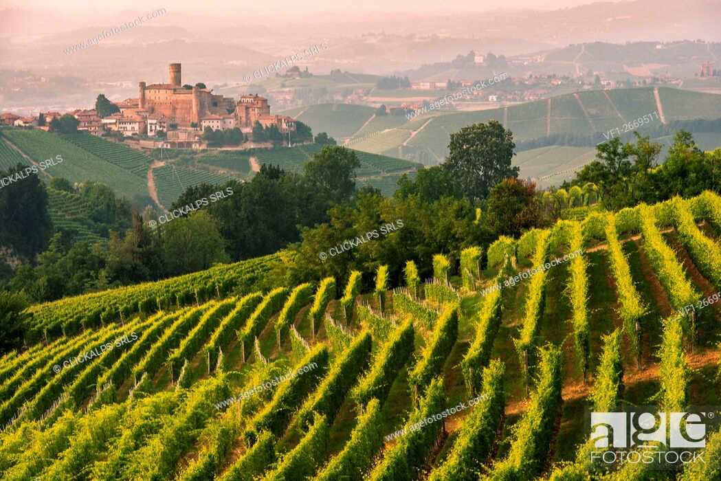 Stock Photo: Italy, Piedmont, Cuneo District, Langhe - summer at Castiglione Falletto.