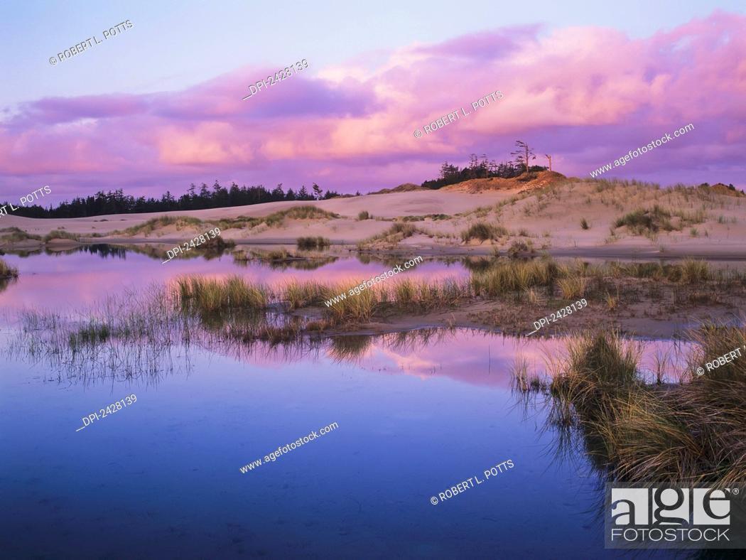 Stock Photo: An ephemeral pool reflects the morning sky; Reedsport, Oregon, United States of America.