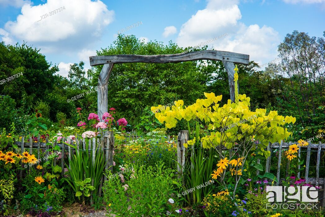 Stock Photo: (New Forest Lavender Gardens, Wiltshire, England).