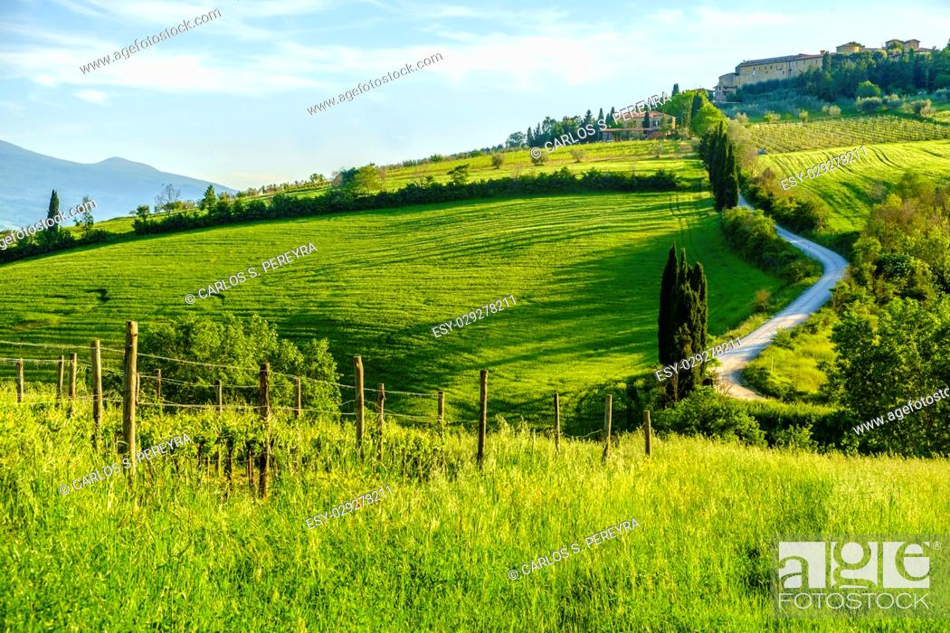 Photo de stock: Countryside landscape around Pienza Tuscany Italy.