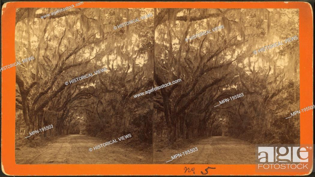 Imagen: Avenue in Bonaventure. Robert N. Dennis collection of stereoscopic views United States States Georgia. Stereoscopic views of cemeteries in Savannah, Georgia.