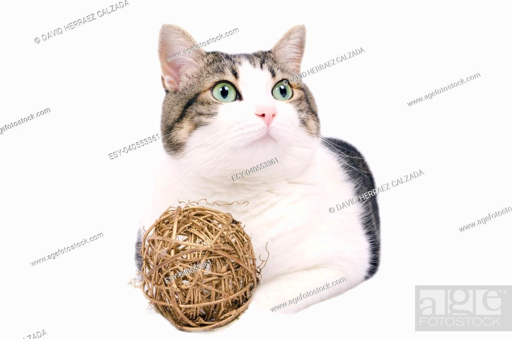 Stock Photo: Beautiful cat over white isolated background.