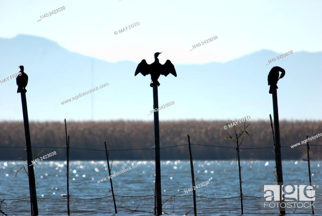 Stock Photo: La Albufera, Valencia, Spain.