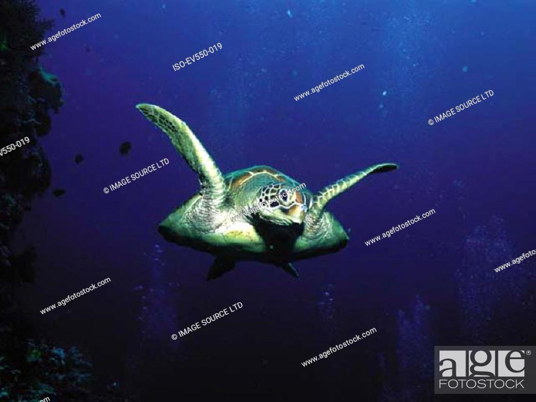 Stock Photo: Turtle.