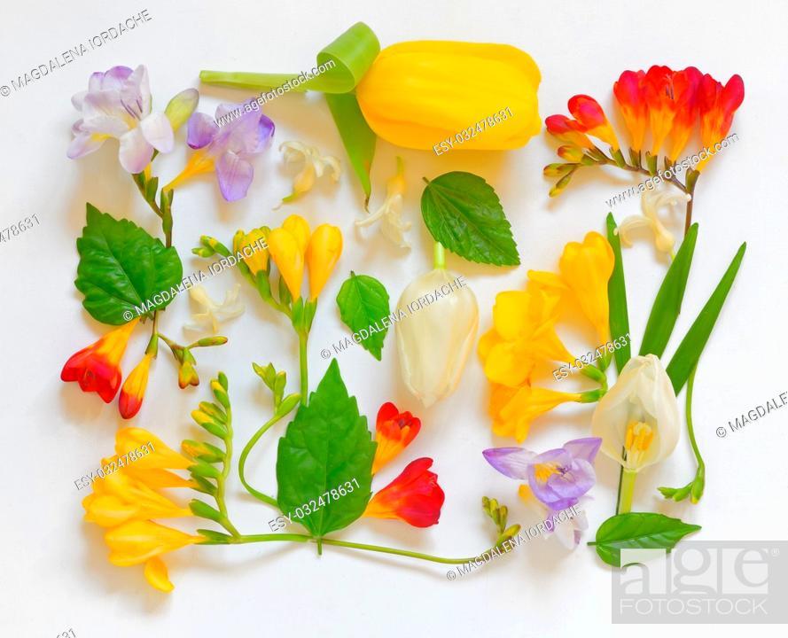 Stock Photo: Spring Flower Frame on white background.