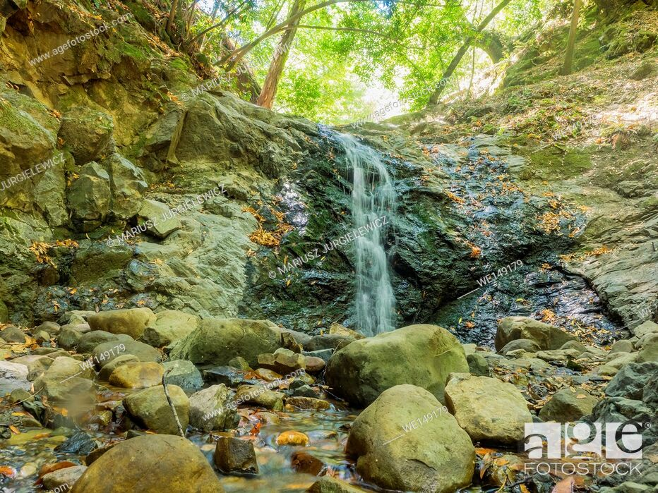 Imagen: Uvas Canyon County Park is natural park is located in upper Uvas Canyon on the eastern side of the Santa Cruz Mountains, west of Morgan Hill, California.