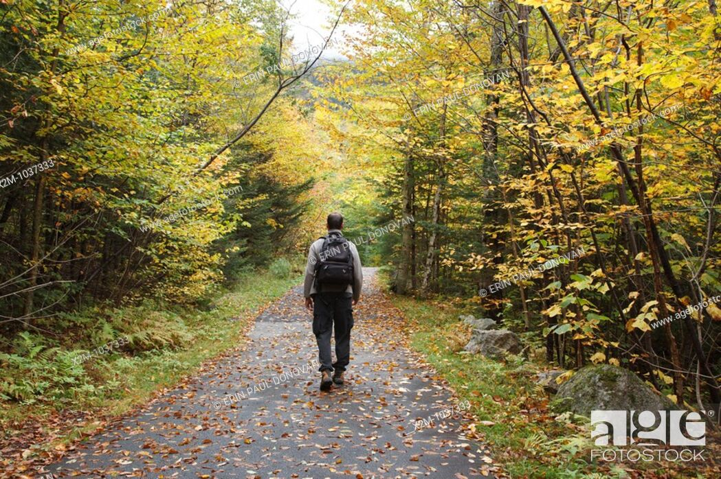 Stock Photo: Franconia Notch State Park - Man walking along Franconia Bike Path during the autumn months in the White Mountains, New Hampshire USA.