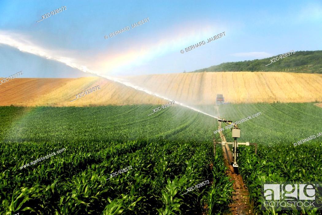 Stock Photo: Field of maize irrigation.