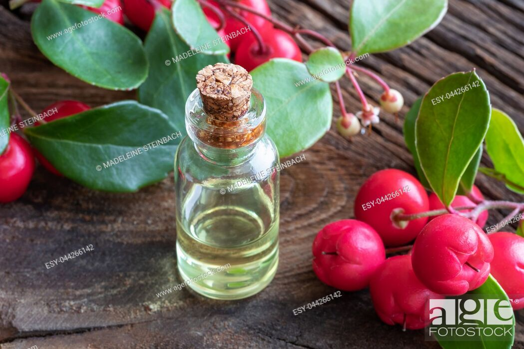 Stock Photo: A transparent bottle of essential oil with fresh wintergreen leaves and berries.