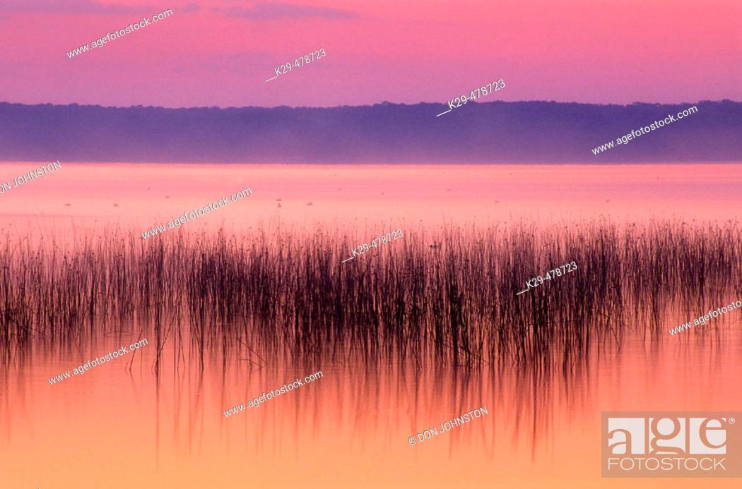 Stock Photo: Lake Mindemoya with reed bed before sunrise. Manitoulin Island, Mindemoya. Ontario. Canada.