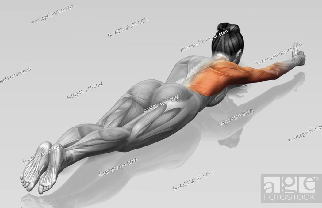 Stock Photo: Arm-leg extensions Part 2 of 2.