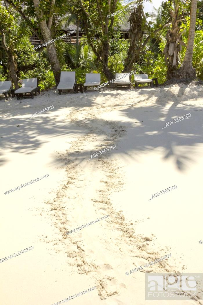 Stock Photo: Turtle laying eggs on the beach at Lemuria Resort on Praslin island. Seychelles. Due to beach erosion the beach is so short.