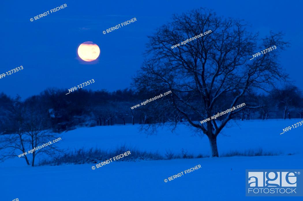 Stock Photo: Moonset in winter, walnut tree, orchard, forest, snow-covered landscape, Franconian Switzerland, Bavaria, Germany.