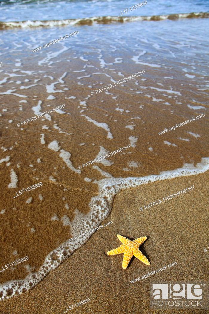 Stock Photo: sea star on sandy beach, Sutherland, Scotland.