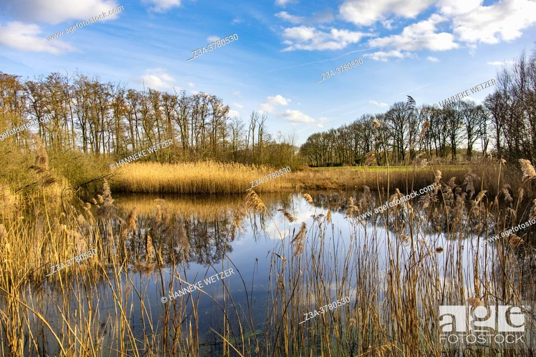 Stock Photo: Water in a Dutch forest, Europe.