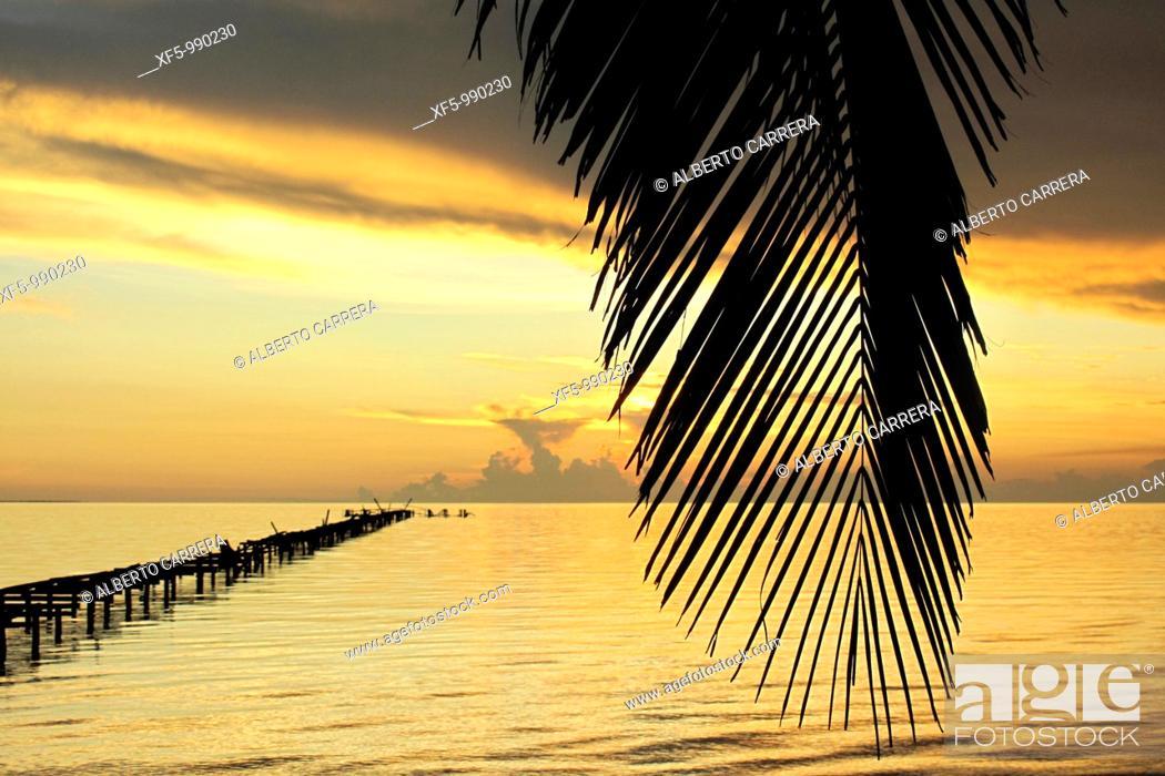 Stock Photo: Orange sunset and palms, Caribbean, Isla de la Juventud, Cuba.