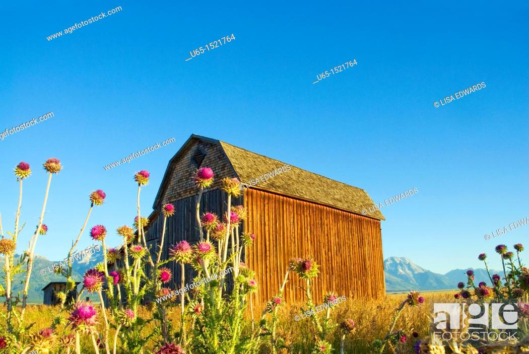 Stock Photo: Barn with the Tetons in the background, Jackson, Wyoming, USA.