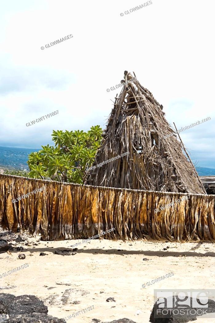 Stock Photo: Tobacco leaves drying in front of a hut, Kona, Big Island, Hawaii Islands, USA.