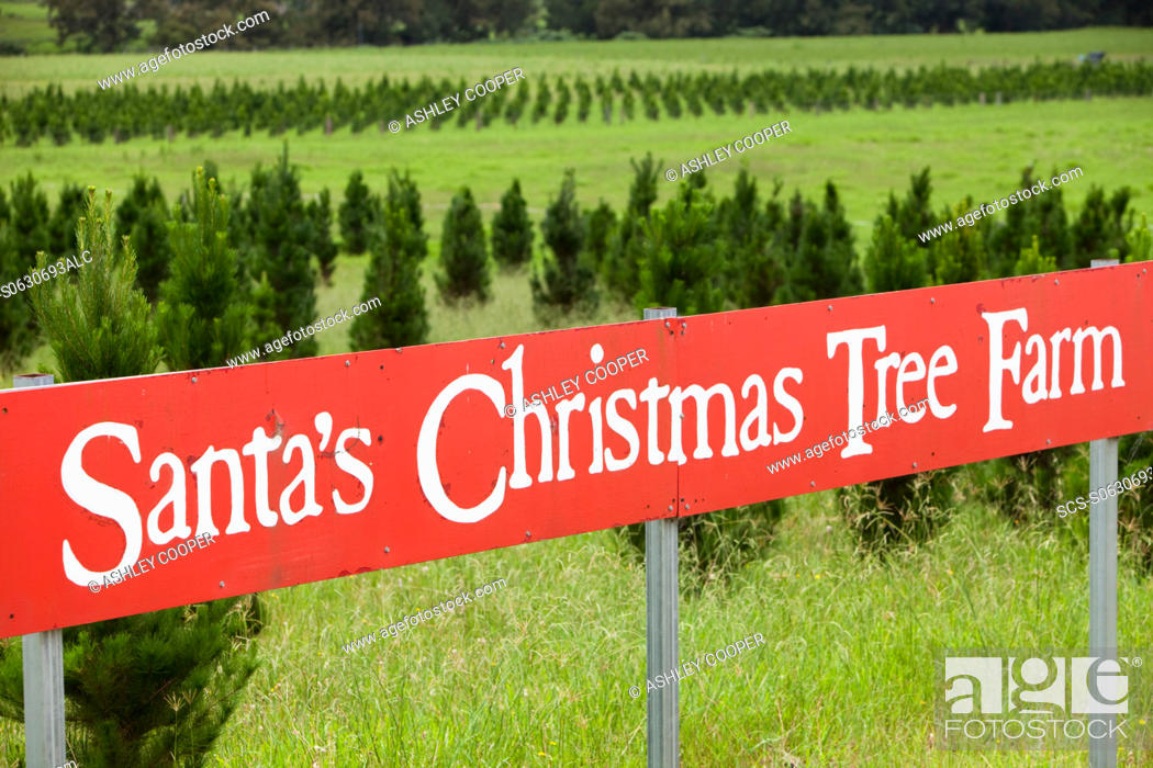 stock photo santas christmas tree farm below the macquarie pass national park in new south