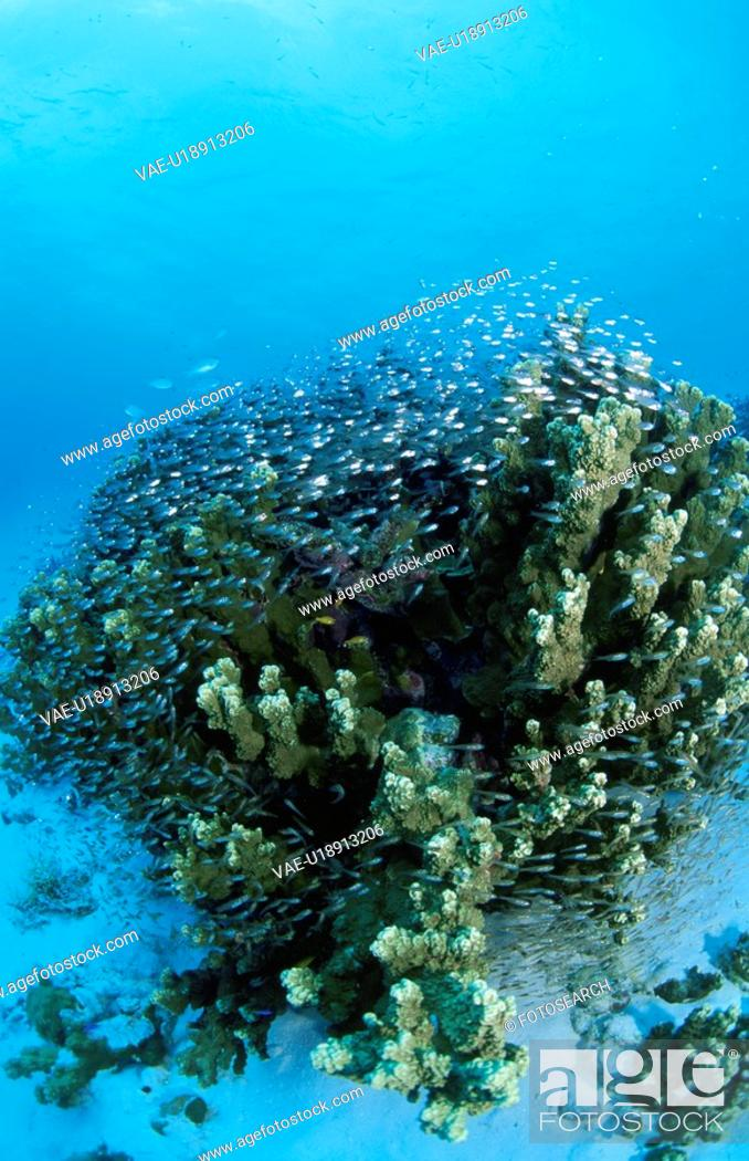 Stock Photo: Coral Of A Track Lagoon Island.
