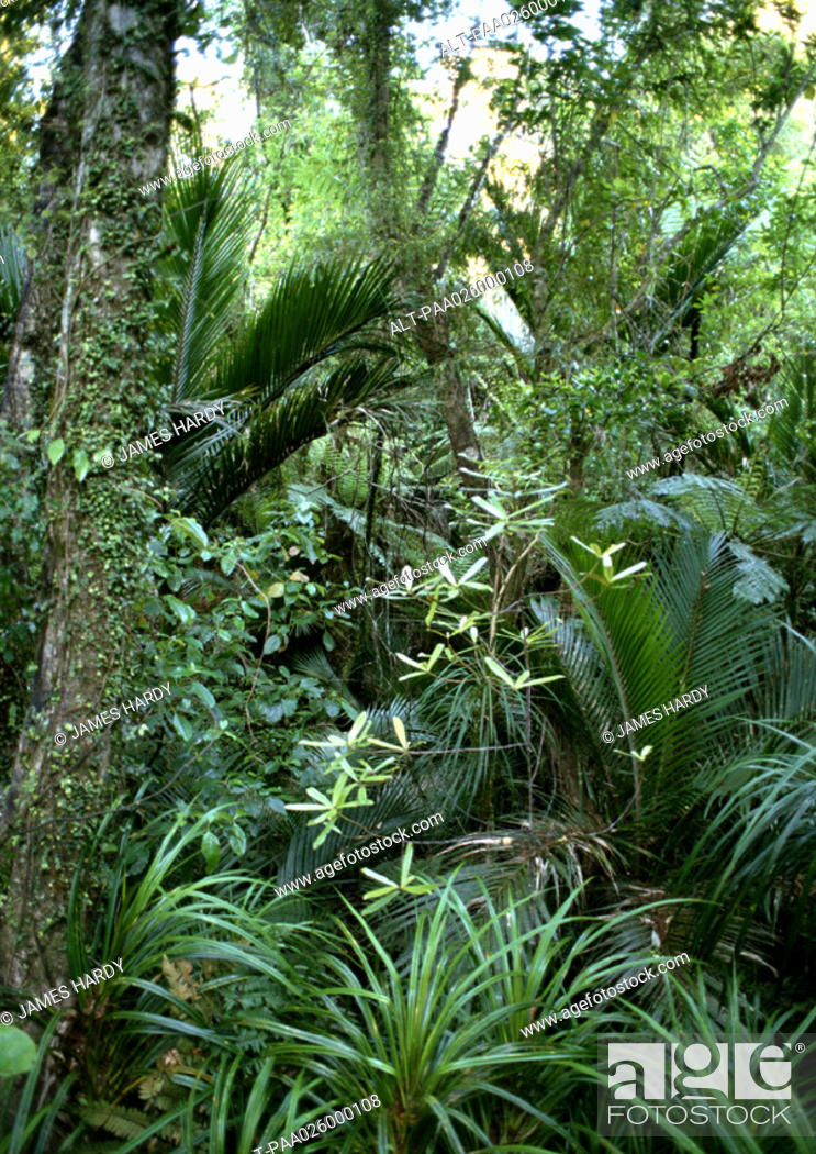 Stock Photo: New Zealand, vegetation in Paparoa National Park.
