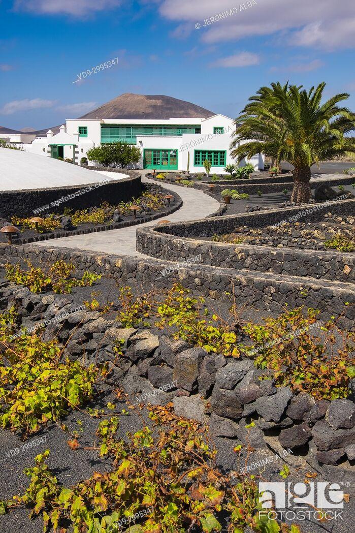 Stock Photo: Exterior view, vineyard. Casa Museo del Campesino, monument to the Farmer. created by César Manrique. San Bartolome. Lanzarote Island, Canary islands, Spain.
