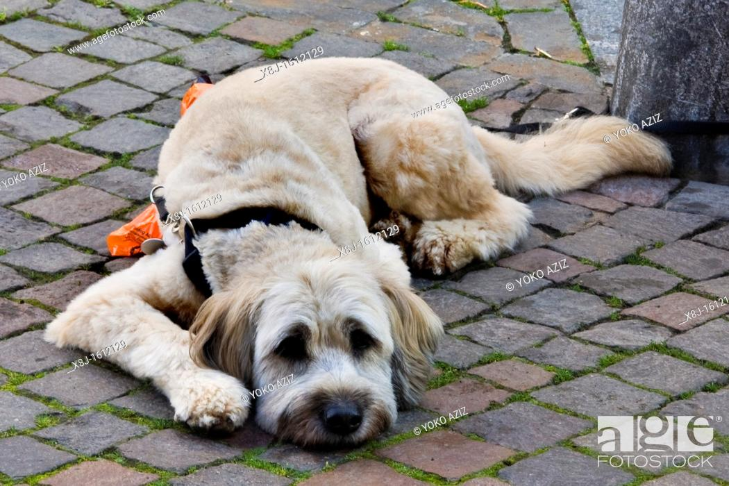 Stock Photo: Dog, Vevey, Switzerland.