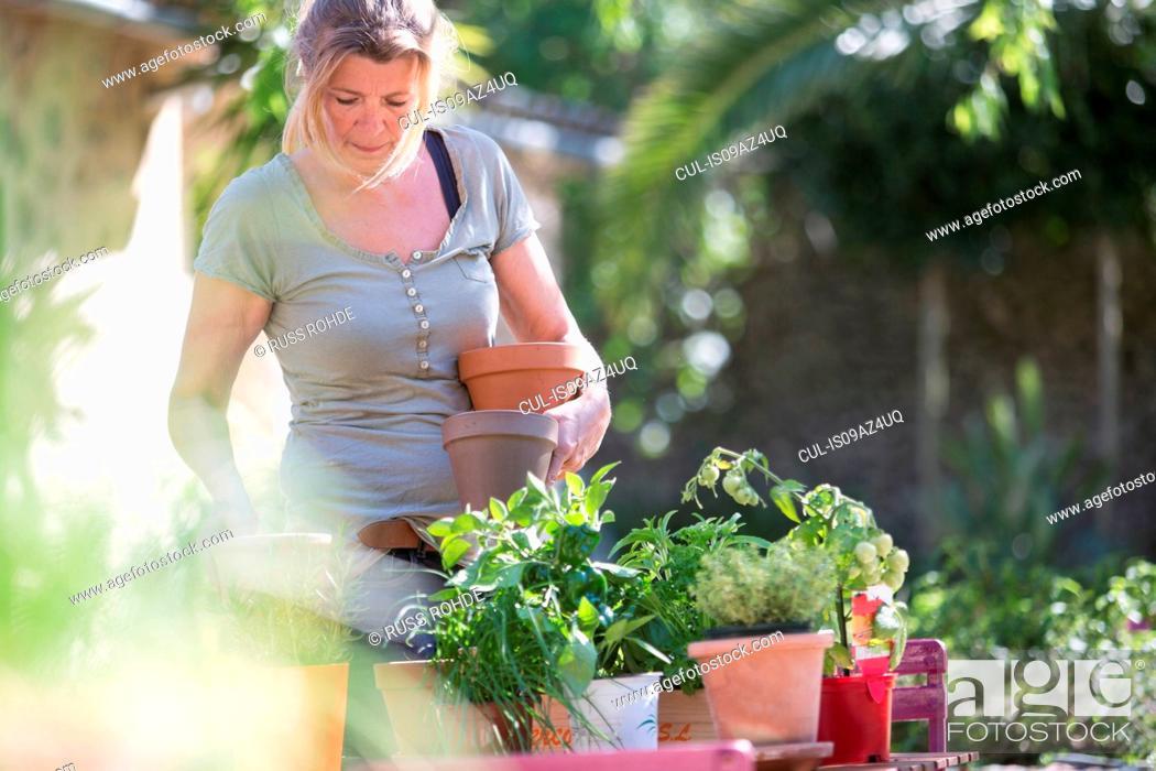 Stock Photo: Woman tending plants in garden.