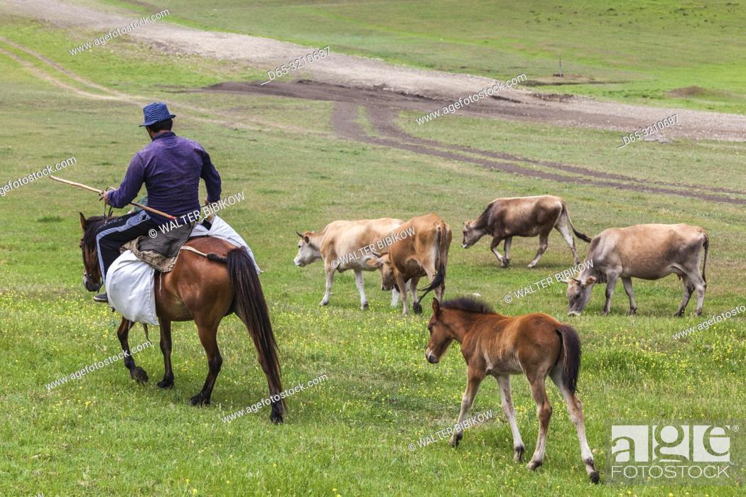 Stock Photo: Georgia, Southeastern Georgia, Udabno, cattle and sheep.