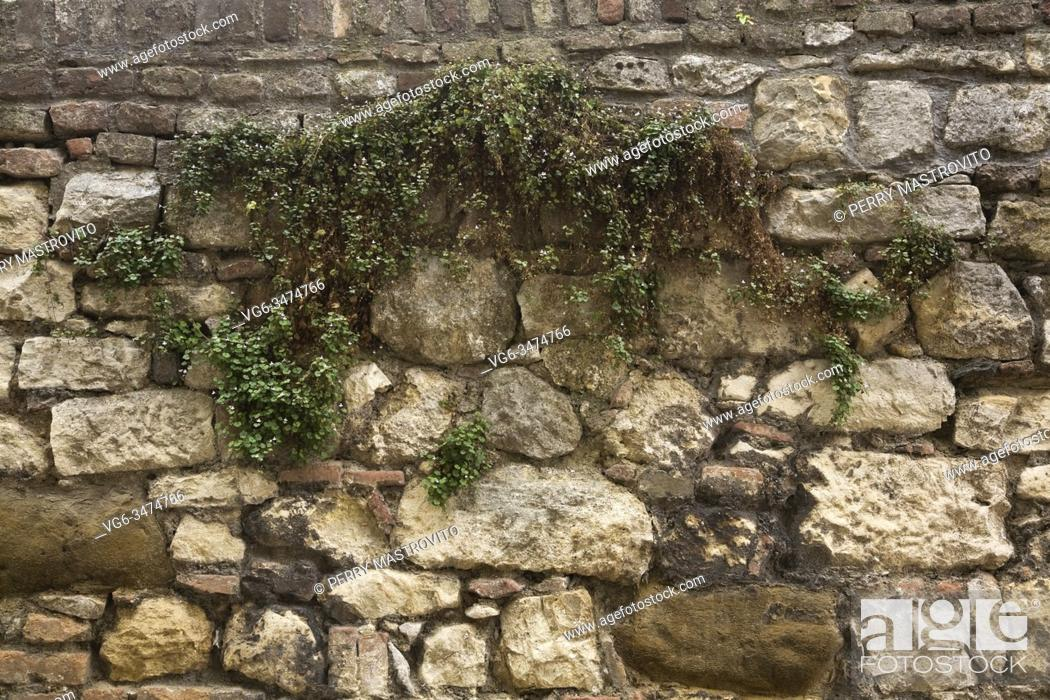 Stock Photo: Hardy green spreading perennial plants growing through cracks and crevices in old fieldstone wall at the Kalemegdan Fortress in late summer, Belgrade, Serbia.