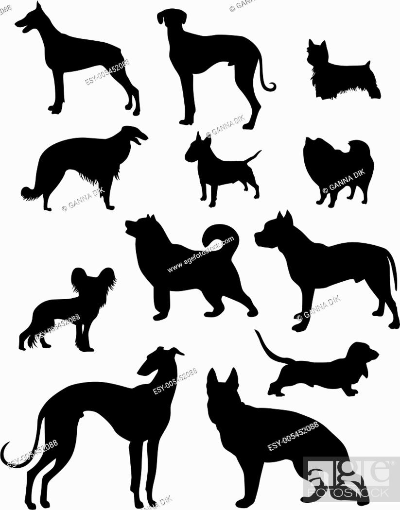 Stock Photo: dog set.