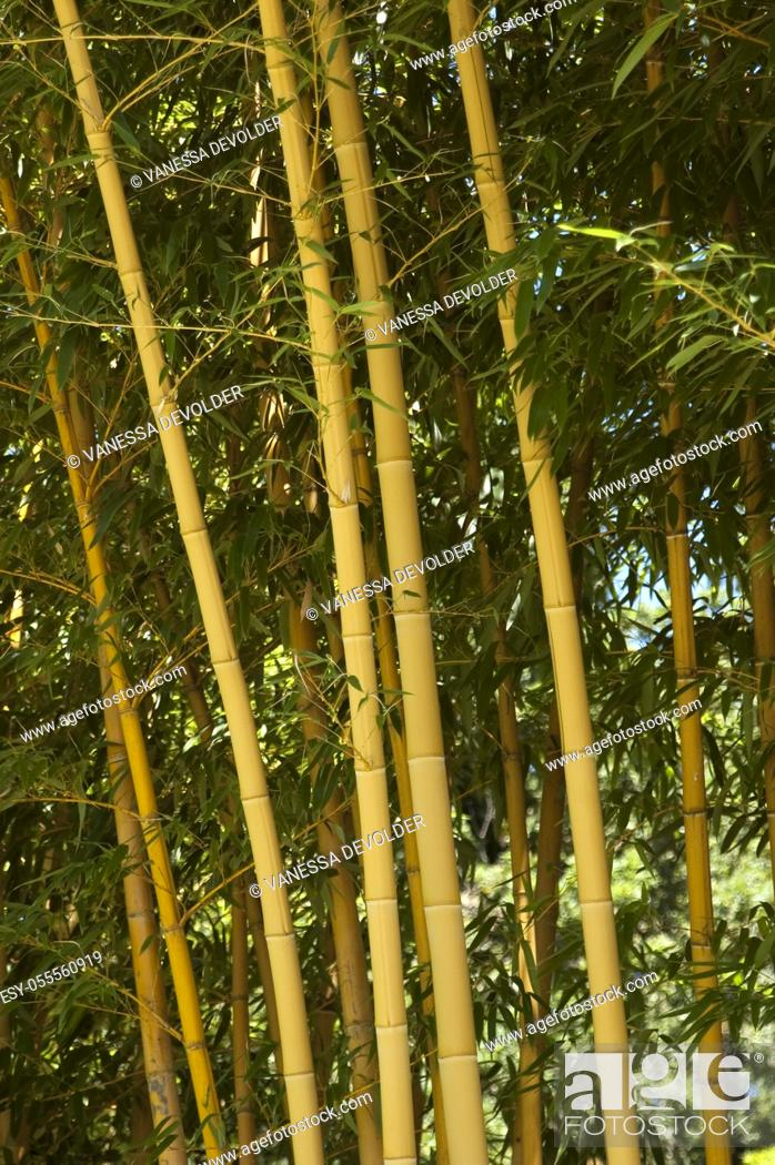 Imagen: Bamboo Forest in France, Europe.