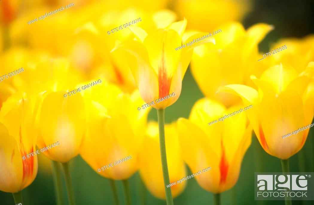 Photo de stock: Flowers.