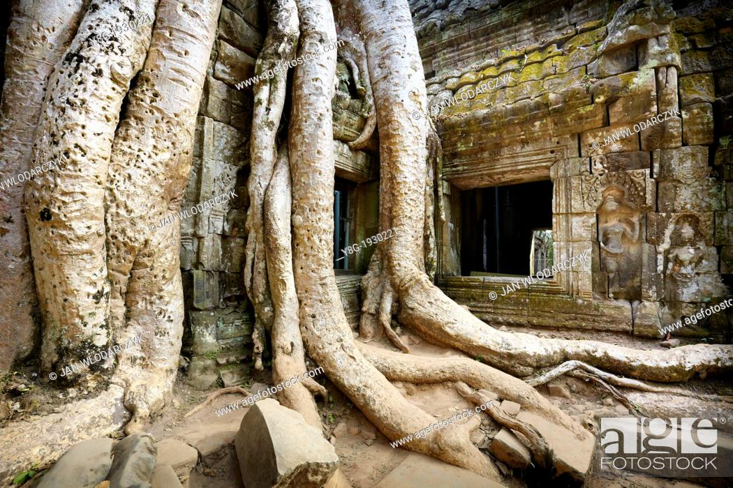 Stock Photo: Angkor - roots of a huge tree overgrowing ruins of the Ta Prohm Temple, Angkor Temple Complex, Cambodia, Asia.