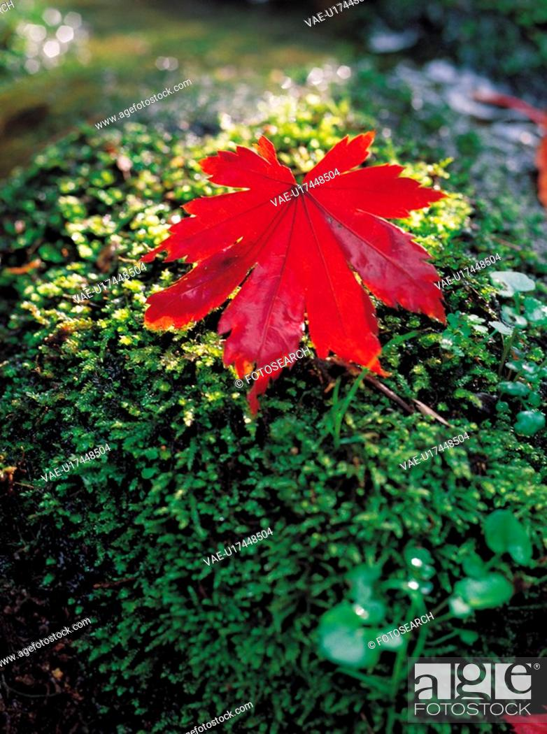 Stock Photo: plants, red, plant, leaf, yellow, moss.