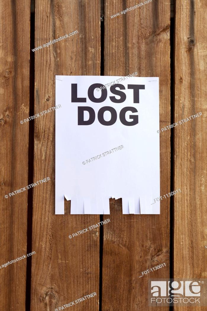 Stock Photo: A flyer posted on a wooden fence with the words LOST DOG on it.