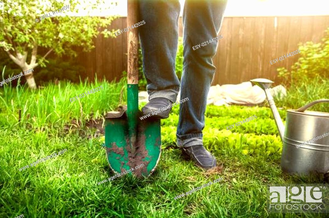 Stock Photo: man holding foot on shovel at garden at sunny day.