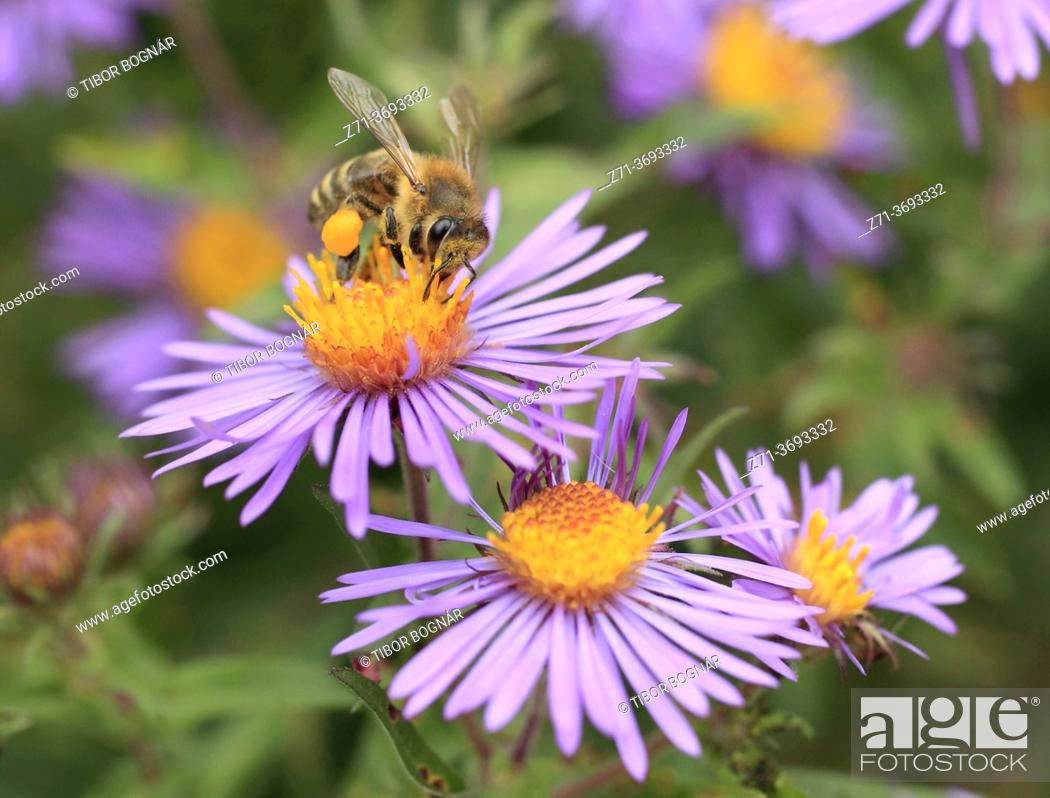 Stock Photo: Wasp, wildflowers, .