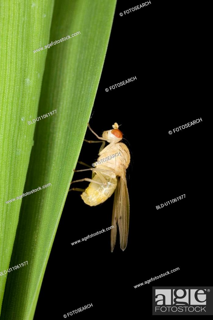 Stock Photo: Close-up of an insect.