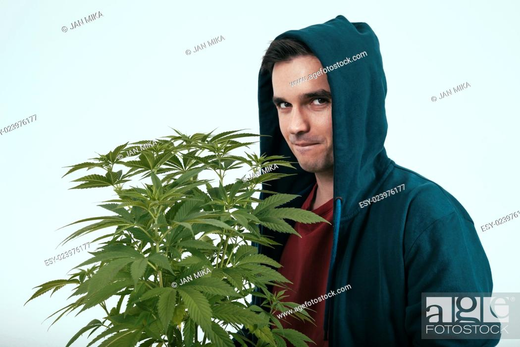 Stock Photo: Young man in hoodie and cannabis plant.