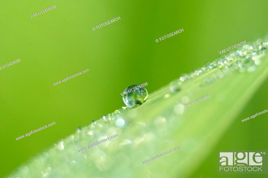 Stock Photo: drop, CLOSE, drip, day, close-up, alfred.