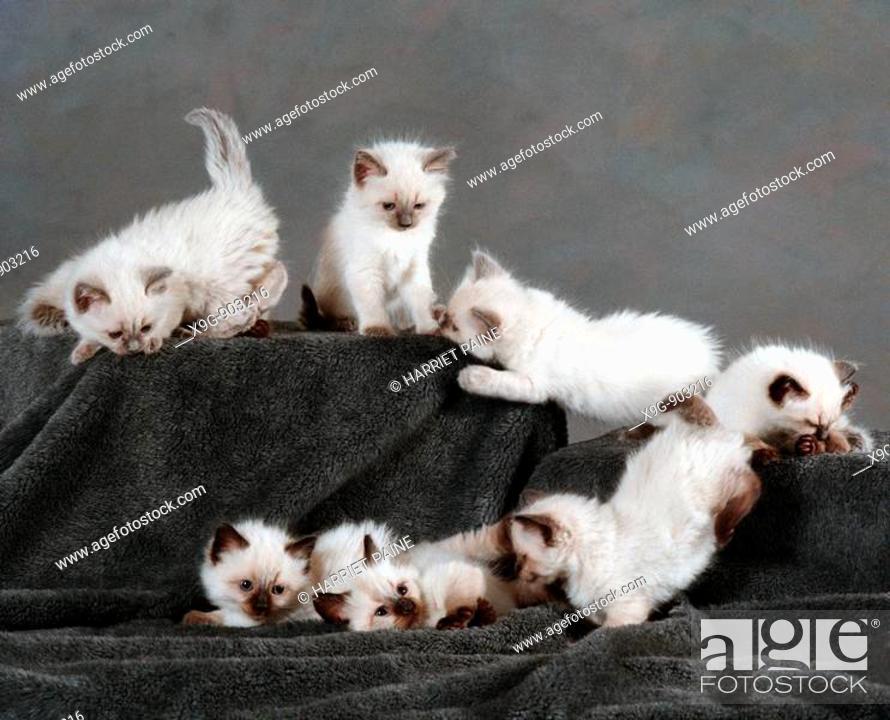 Stock Photo: Kittens.